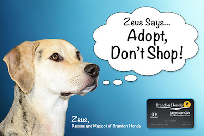 Adopt Don't Shop ad at New Barker